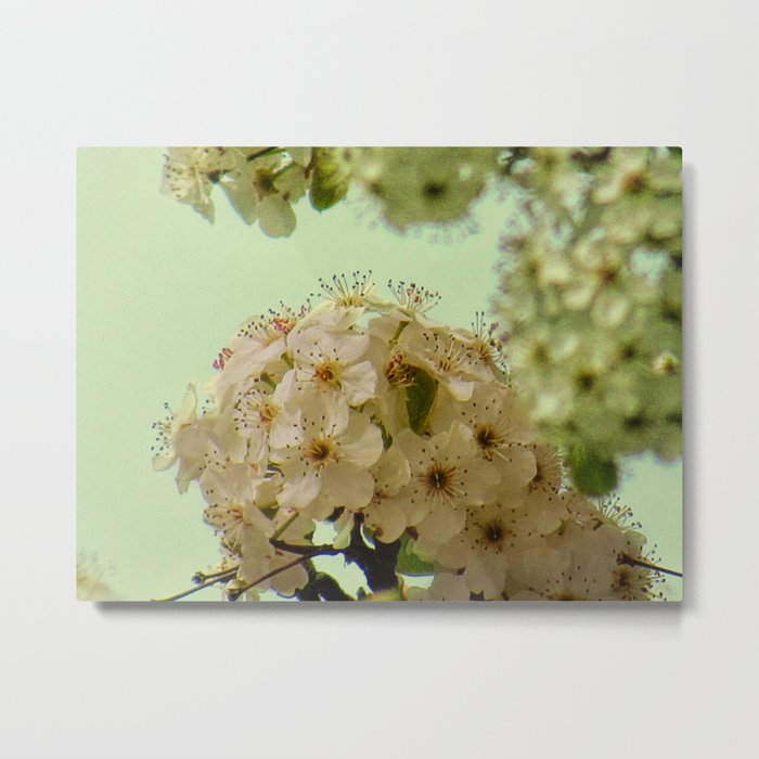 Spring Flowers on mint green background A377 Metal Print