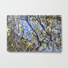 Nature Series: Spring Metal Print