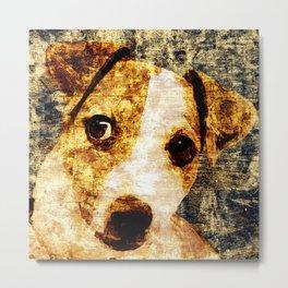 「sit」Jack Russell Terrier Metal Print