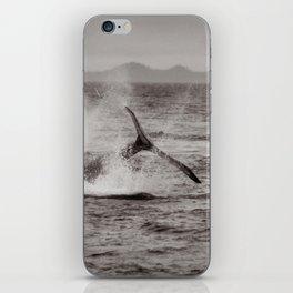 Whale Watching - Humpback Whale iPhone Skin