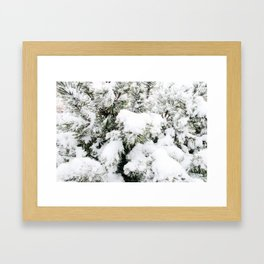 Pine Needles in the Snow Framed Art Print