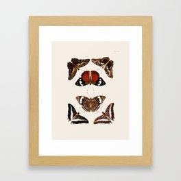 Vintage Butterfly Chart III Framed Art Print