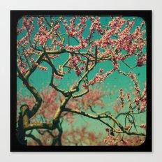ttv Cherry tree Canvas Print