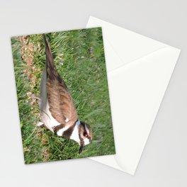Killdeer Browsing Stationery Cards