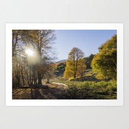 Autumn Oaks Art Print