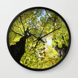 Tall Maple Trees in the Jackson County Forest Wall Clock