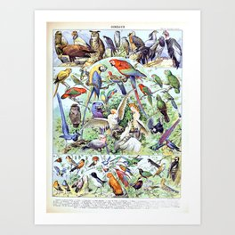 Adolphe Millot - Oiseaux A - French vintage poster Art Print