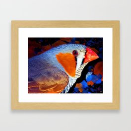 Zebra Finch Painted Framed Art Print