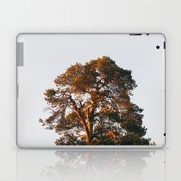 Half Tree Laptop & iPad Skin