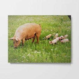 Momma & Piglets in the Meadow Metal Print