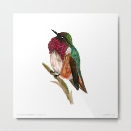 Wine-throated Hummingbird Metal Print