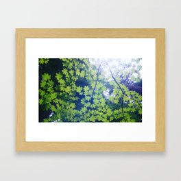 Canopy Framed Art Print