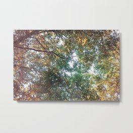 Forest 011 Metal Print