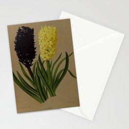 Arendn, Arentine H. (1836-1915) - Haarlem's Flora 1872 - Hyacinths 4 Stationery Cards