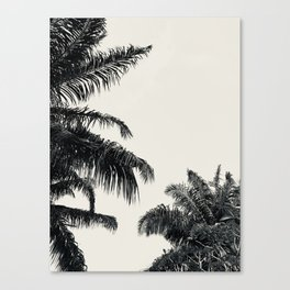 Beneath the palm Canvas Print