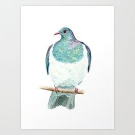 Kereru / Woodpigeon - a native New Zealand bird 2014 Art Print