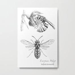 European Wasp, Vespula germanica  Metal Print
