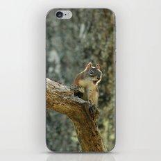 Brown Squirrel iPhone & iPod Skin