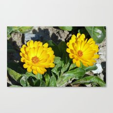 Two Marigolds Canvas Print