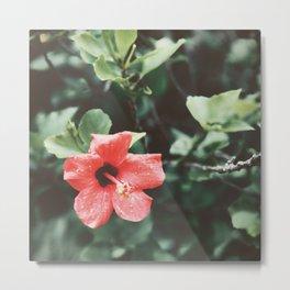 Red Hibiscus Rain Metal Print