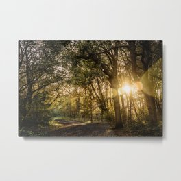 Sunset @ the forest - Framed Art print trees, leaves, fall colors  Metal Print