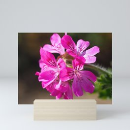 Pink Pelargonium Mini Art Print
