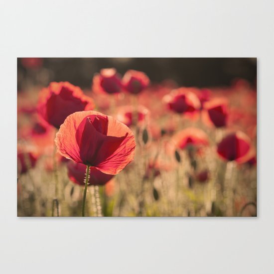 Poppies meadow Flower Flowers Floral Summer Canvas Print