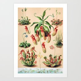 Carnivorous plants from 1898 Art Print