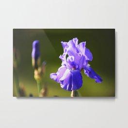 Iris in purple Metal Print