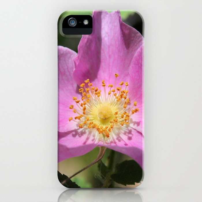 One Wild Rose iPhone Case