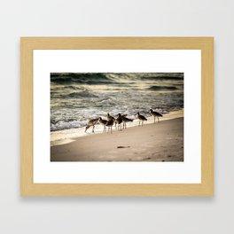 Birds on the Beach of Anna Maria Island Framed Art Print