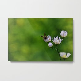 Wildflower Landing ~ Ginkelmier Inspired Metal Print