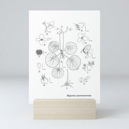 Begonia caramoanensis by Yu Pin Ang Mini Art Print