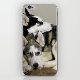Tan and White Husky, and Black and White Siberian Husky with Blue Eyes Snuggling iPhone Skin