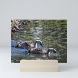 Two Goslings Taking a Swim, No. 1 Mini Art Print