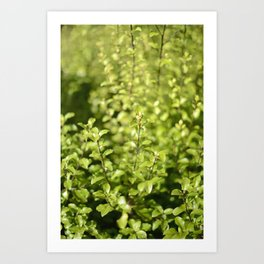 Through The Green Art Print