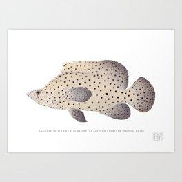 Barramundi Cod Art Print