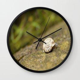 Festina Lente Wall Clock