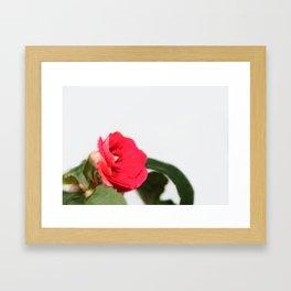 small red flower Framed Art Print