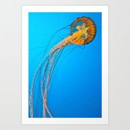 Animality: Jellyfish, Solo. Art Print