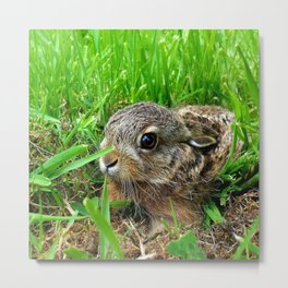 Lovely Bunny Baby Metal Print