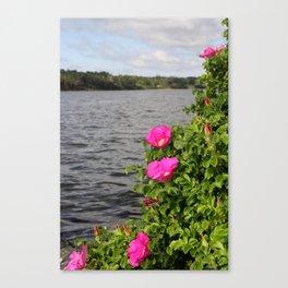 Seaside Wild Roses Canvas Print