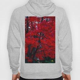Red Maple leaves Hoody