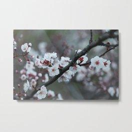 Dreamy White's Blossom Metal Print