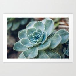 Succulent - Part I Art Print