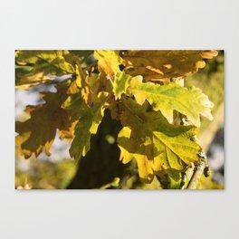 Autumnal Shades Canvas Print