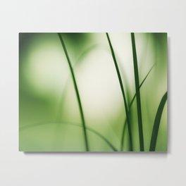Green Abstract Nature Photography, Green Botanical Grass Photo, Modern Nature Print Metal Print