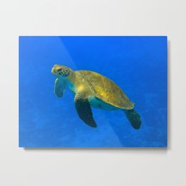 Wildlife: Green Turtle I Metal Print
