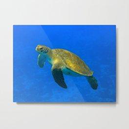 Wildlife: Green Turtle I Metal Print