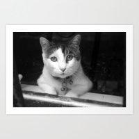 The Neighbor's Curious Cat Art Print